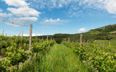 Querciabella – Spitzenweingut im Chianti Classico
