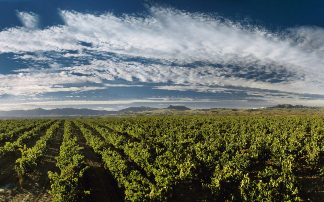 Viñedos Singulares – das Konzept der Lagenweine in der Rioja
