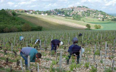 Domaine Vacheron – ein Edelstein in Sancerre